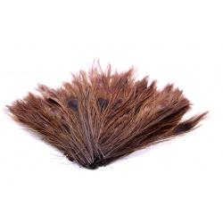PEACOCK EYES - BROWN