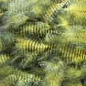 GRIZZLY MARABOU yellow / black barred